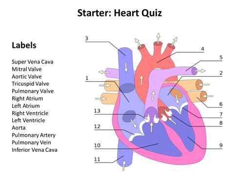 Circulatory System By Joight Teaching Resources Tes