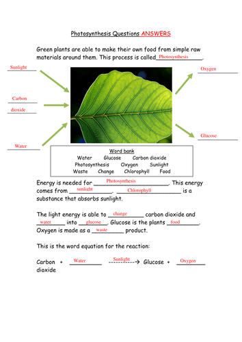 KS3 Rate of Photosynthesis by CatBuckle - Teaching Resources - Tes