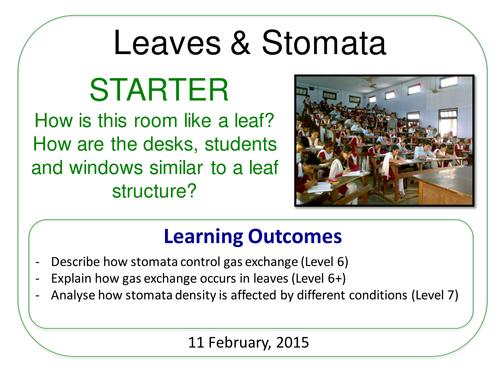 Year 7: Stomata (Plants & Ecosystems 7.6)