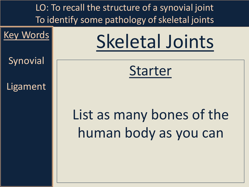 Skeletal Joints