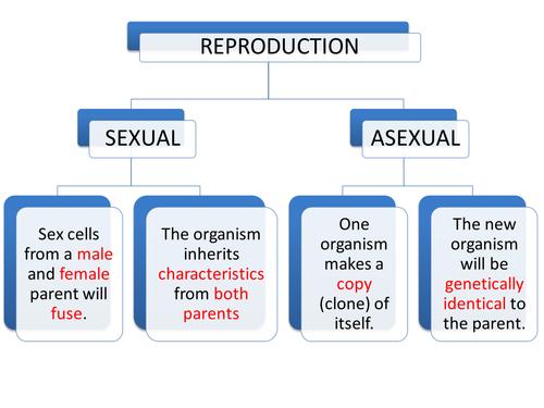 IGCSEGCSEStandard Grade Asexual Sexual and Plant Reproduction – Asexual and Sexual Reproduction Worksheet