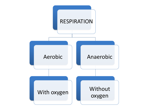 IGCSE/GCSE/Standard Grade Anaerobic respiration PowerPoint