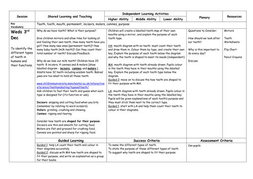 Digestion by HamiltonTrust Teaching Resources TES – Digestion Worksheet