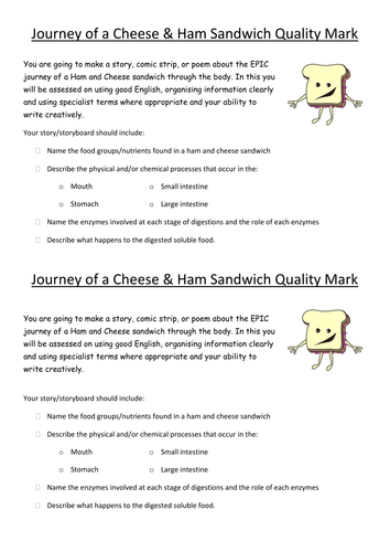 the journey of a cheese sandwich through the digestive system