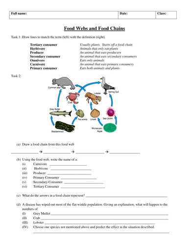 Food Chains and Webs worksheet (improved)