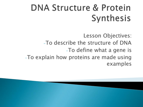 DNA Structure & Protein Synthesis