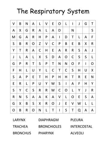 Respiratory System Wordsearch By Pehq Teaching Resources