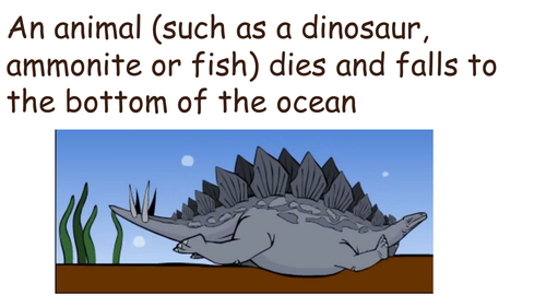 How fossils are made KS2 simple by katherineslessor Teaching – Fossil Worksheet