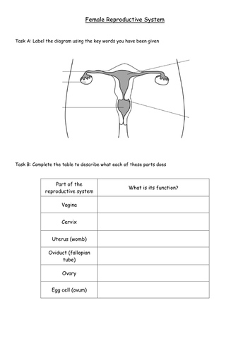 human reproductive organs sheet by cdaubner teaching resources tes. Black Bedroom Furniture Sets. Home Design Ideas