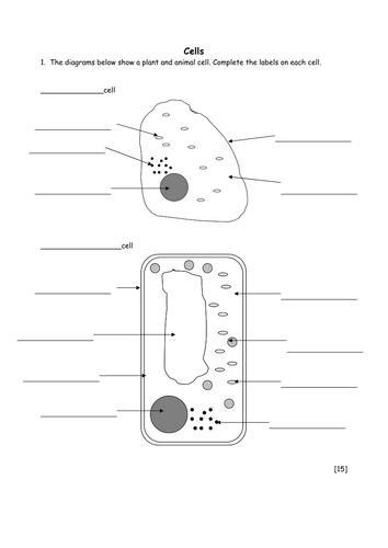Biology 4 Animal Cells By Crashcourse Teaching