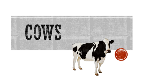 Cows: cuts of meat, bi-products