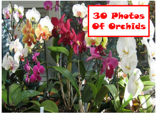 30 Photos Of Orchids