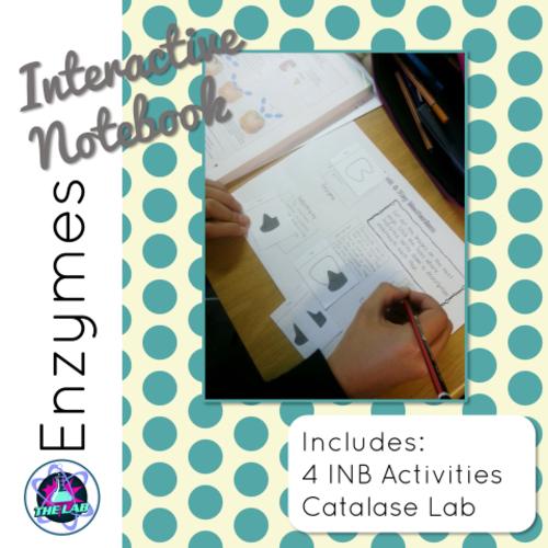 Enzyme Interactive Notebook activities