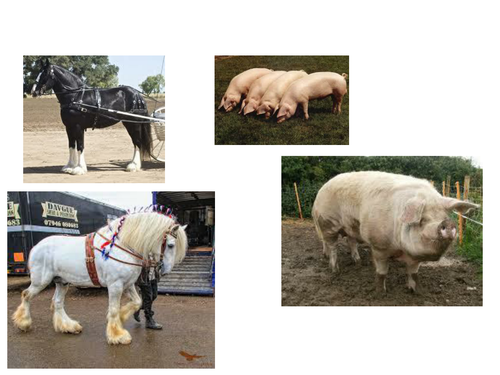 Complete Animal Farm SOW and resources for EDEXCEL