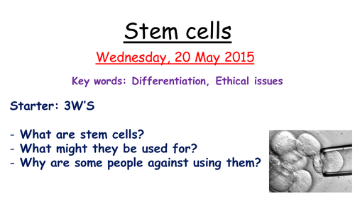 Stem cells by zuba102 Teaching Resources Tes – Stem Cell Worksheet