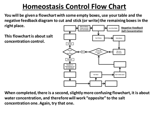 Negative Feedback Homeostasis Of Water Cut And Stick By