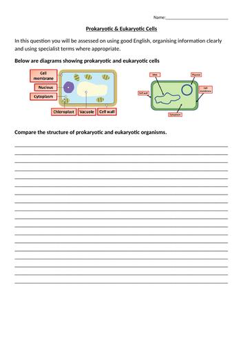 New AQA 2016 GCSE Science Spec Eukaryotes & Prokaryotes  Lesson | Teaching Resources