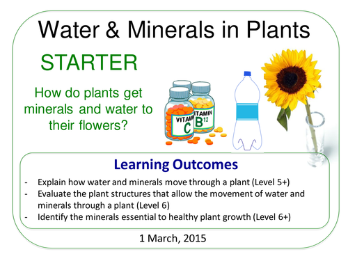 Grade 6-12: Water & Minerals in Plants  (Plants & Ecosystems 7.6)