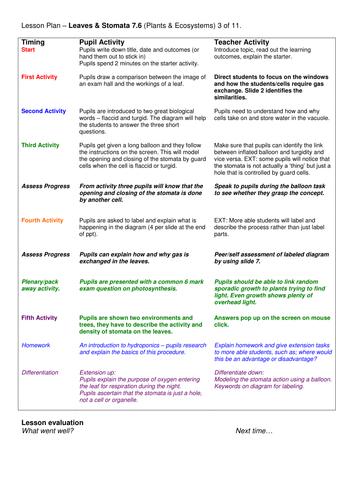 Grade 6-12: Stomata (Plants & Ecosystems 7.6)
