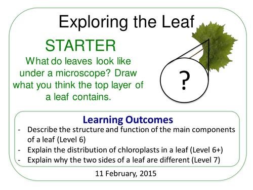 Grade 6-12: Exploring The Leaf (Plants & Ecosystems 7.6)