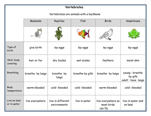 Main features of vertebrate groups by mnsh2012 Teaching – Vertebrate Worksheet