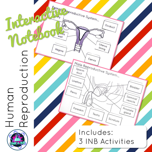 Human Reproduction Interactive Science Notebook By