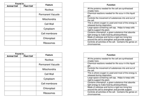 Organelles and their functions match up task by bennettej – Cell Organelles and Their Functions Worksheet