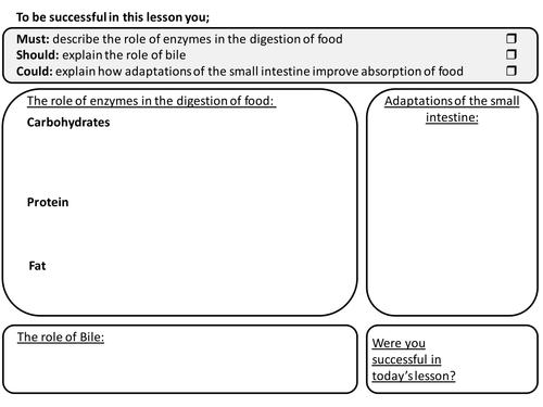 Enzymes Bile and Villi Worksheet for GCSE Edexcel by Rachael – Enzymes Worksheet