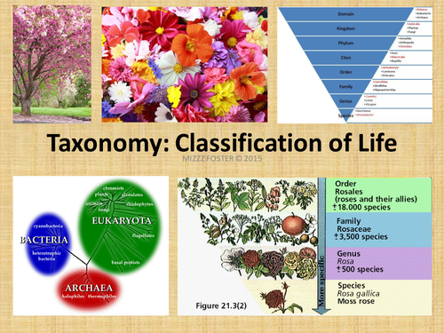 Taxonomy and Classification of Life Power Point