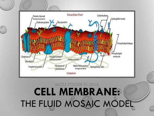 Cell Membrane Power Point