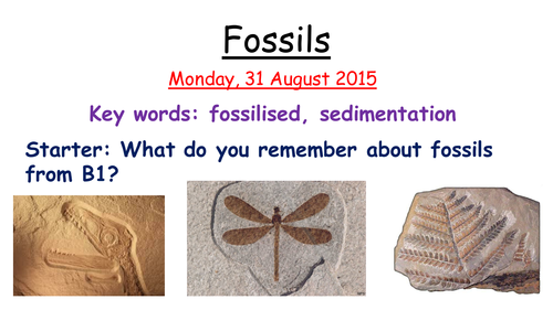 Using Fossil Evidence by mwiggins - Teaching Resources - Tes
