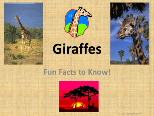 Giraffes  Fun Facts about Giraffes PowerPoint