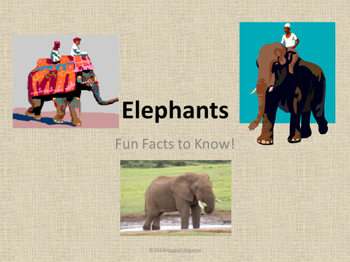 Elephants Fun Facts About Elephants PowerPoint