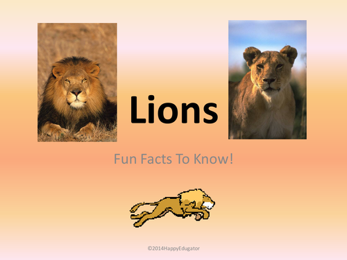 Lions - Fun Facts About Lions PowerPoint