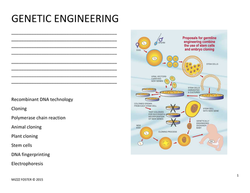 Genetic Engineering Worksheet and Answer Key by mizzzfoster – Genetic Engineering Worksheet