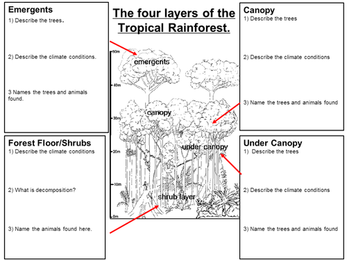 Rainforest by claire494 Teaching Resources TES – Layers of the Rainforest Worksheet