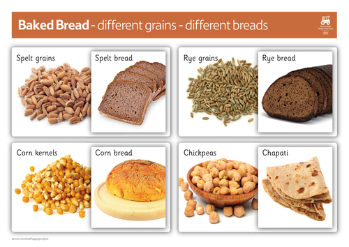 Different grains - different breads (7-11) | Teaching ...