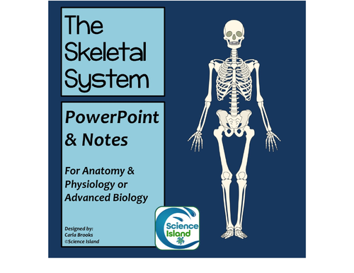 Skeletal System PowerPoint and Notes by Scienceisland - Teaching ...