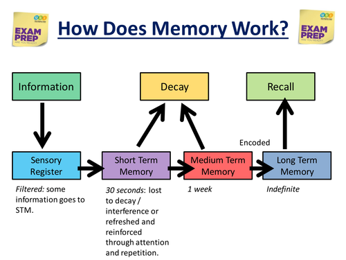 Gcse Exam Technique How Memory Works By Ellejayd24