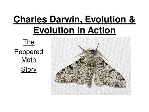 GCSE Biology - Evolution in action