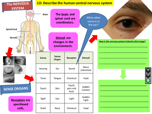 Homeostasis - Nervous and Hormonal systems