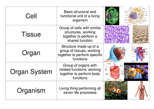 cells organs tissues card sort by mabowman teaching resources tes. Black Bedroom Furniture Sets. Home Design Ideas