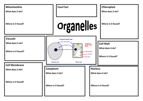 Cell structure and organelle function by jbg501 Teaching – Cell Organelles and Their Functions Worksheet