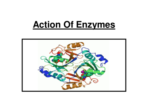 level biology coursework enzymes Stephen lucas missjohnson a2 biology coursework 1 an investigation into how the volume of lipase affects the rate of the enzymes can influence two reactions.