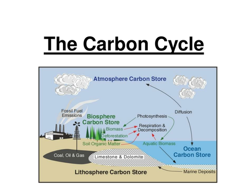 Gcse Carbon Nitrogen Cycle By Jam2015 Teaching Resources Tes