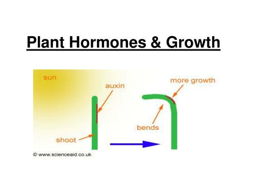 GCSE - Plant hormones and growth (Foundation/SEN)