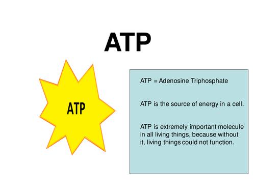 New AQA AS Biology - ATP & Inorganic Ions