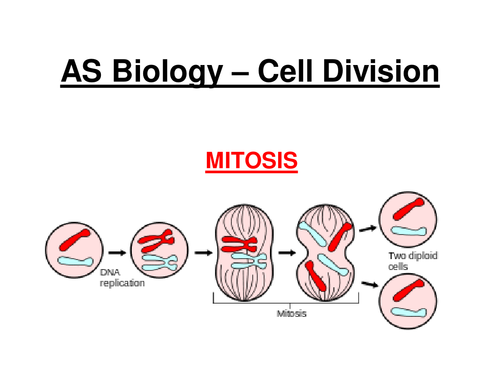 New AQA AS Biology - Cell Division (Mitosis)