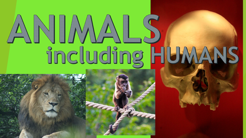 Image result for animals including humans