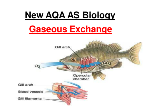 New AQA AS Biology - Gaseous Exchange  & Dissections